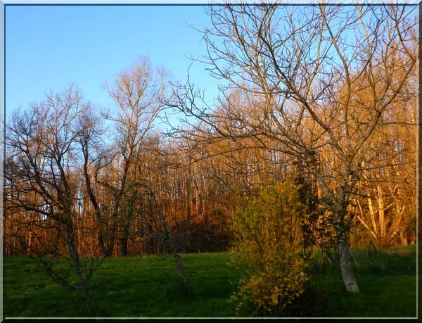 Arrière du jardin de la cabane NT, Tarn ouest, proche de la forêt de Grésigne, à Puycelsi