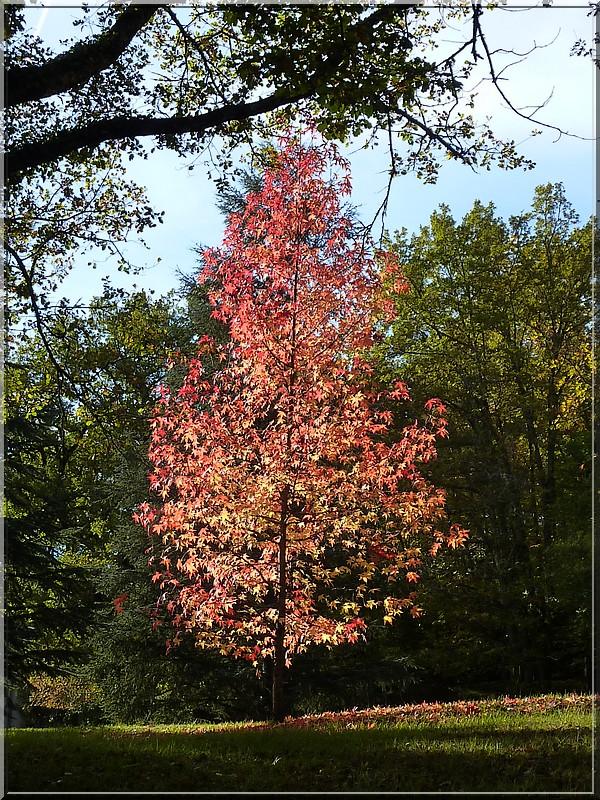 L'arbre rouge (12.11.2016)