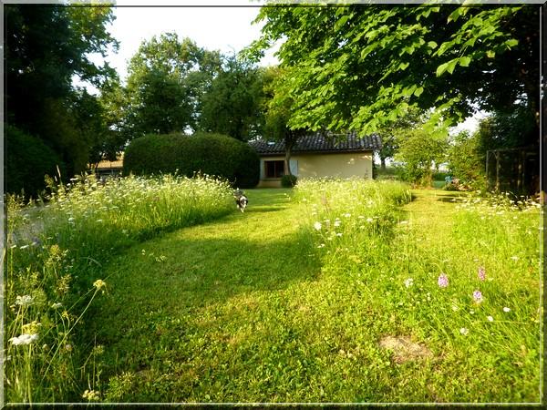 Entre le portail et la maison, un peu de biodiversité