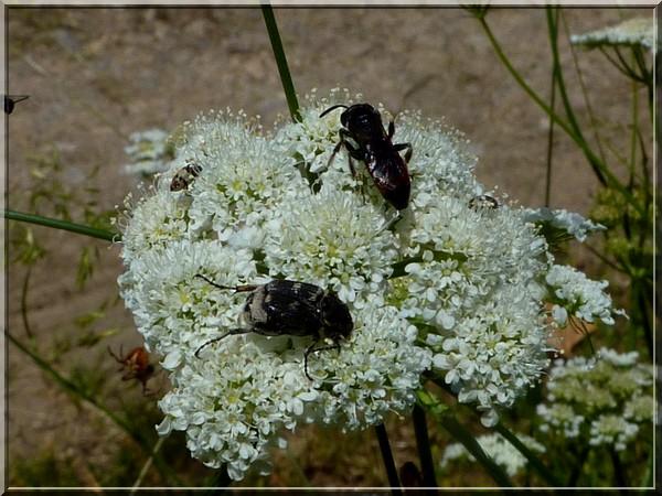 Quatre insectes sur une même fleur